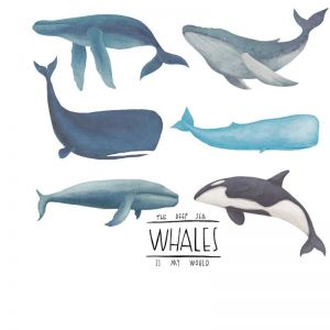 Ocean Wall Decals | Fish Wall Decals